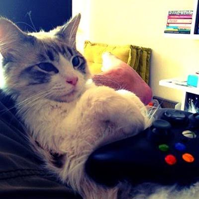 ¿Qué es un gato gamer y por qué deberías adoptar un gatito si juegas?